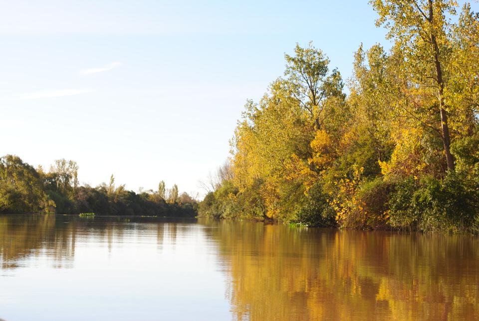 humedales en el delta del paraná
